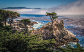 The Lone Cypress, Pebble Beach, California, USA