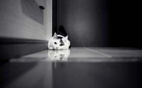 Blanco, en blanco y negro, puerta, COTE, gato, gabinete, azulejo