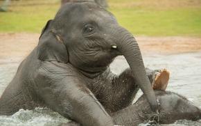 вода, слоны, купание, слонята