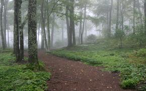 The Woodland Glade at Southern Highlands Reserve, Toxaway, North Carolina, USA