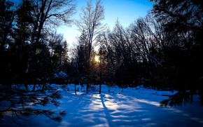 sunset, winter, forest, trees