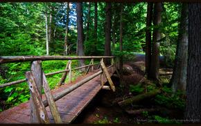 forêt, pont, nature