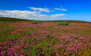 Парк ЮАР West Coast, Природа, Цветы