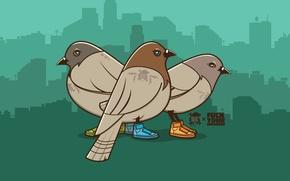 картинка, голуби