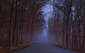 strada verso il nulla esplorati, foresta, stradale