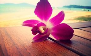 орхидея, море, розовый, цветок