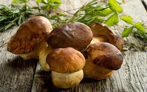 грибы, белые, столешница