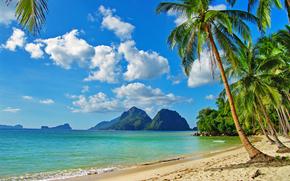 coast, Palms, Islands