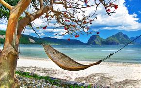 coast, Palms, hammock