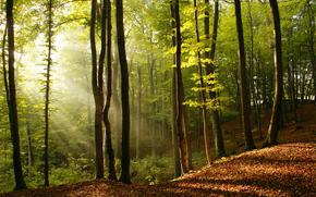 лес, поляна, луч