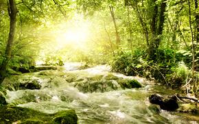 лес, ручей, свет