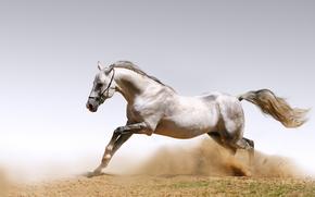 cavallo, polvere, esecuzione
