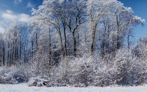 foresta, inverno, monitor standard
