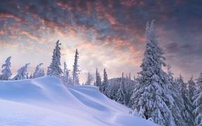 foresta, nevicata, inverno