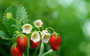 strawberry, BERRY, background