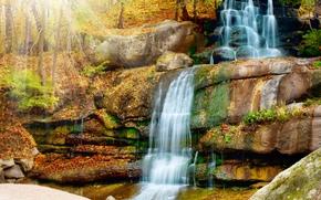 cascata, foresta, autunno