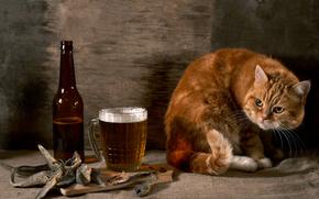 COTE, beer, FISH, tyapnitsa