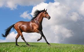 конь, буланый, фон