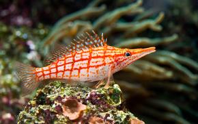 тропическая, рыбка, кораллы