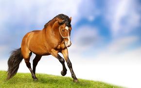 конь, трава, фон
