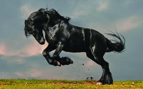 конь, вороной, фон