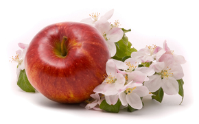 apple, Flowers, background