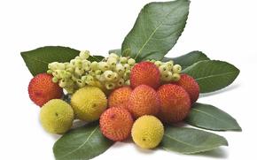 ягоды, листья, фон