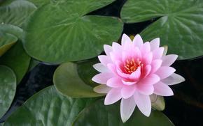 loto, Giglio, pond