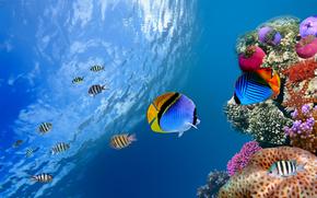 tropic, fish, Corals