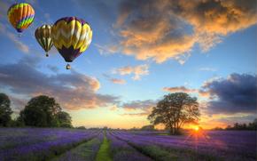 поле, деревья, воздушные шары