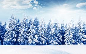лес, снег, зима, солнце