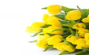 тюльпаны, букет, фон
