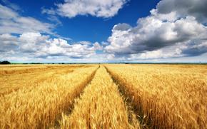 campo, trigo, cielo, nubes
