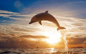 delfino, saltare, mare, sole