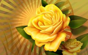 foliage, Rays, yellow, Flower, Two