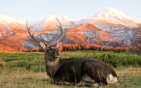 deer, sitting down, mountains