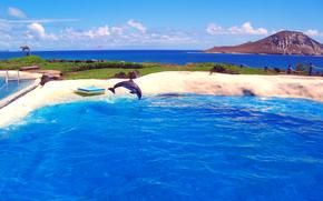 mare, piscina, delfino