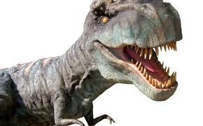 Tyrannosaurus, Rex, Tyrannosaurus, dinosauro