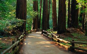 лес, дорога, панорама