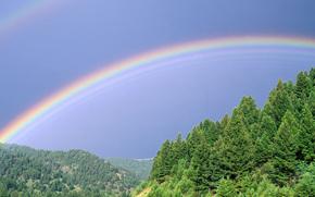 лес, радуга, панорама