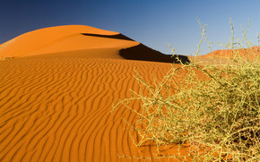 пустыня, бархан, кустарник