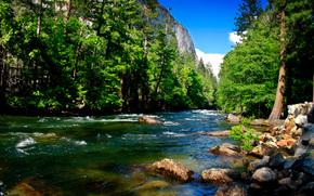 горы, лес, река, камни