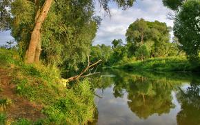 Bäume, Fluss, Gras