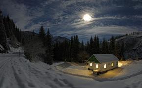notte, domestico, foresta, nevicata