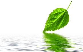 лист, зеленый, вода, отражение