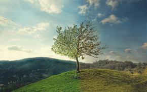 seasons, by, Ruslan Kadiev