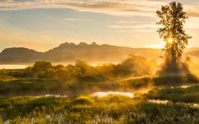 Raggi dorati, Jerry Sulina Parco, Maple Ridge, British Columbia, Canada