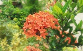 Flor, rojo, chintan, India
