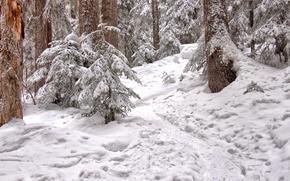 Ruta con raquetas de nieve, Joffre Lake, Pemberton, Colombia Británica, Canadá
