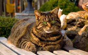cat, bench, garden